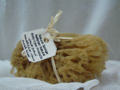 Small size untreated sea sponge